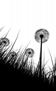dandelion puff weed.png