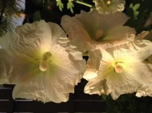 Charlenes flowers 1