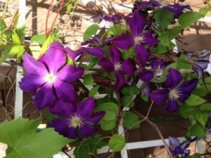 Charlenes flowers 3