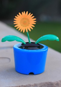 Solar Daisy