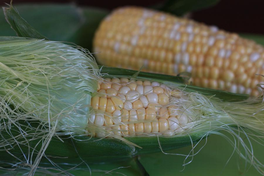 clean-corn